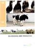 Booklet 12 - Holstein Bull Beef